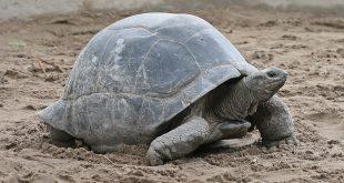 الكائنات الحية الأطول عمراً على سطح الأرض وأكبرها