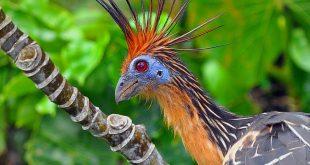 أنواع الطيور التى تدافع عن نفسها بطرق غريبة وعجيبة