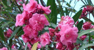 أغرب النباتات السامة التى تم إكتشافها حتى الأن مع صورها الرائعة