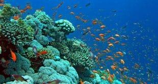 اكتشافات غريبة في قاع المحيطات لم يسبق لك بسمعها من قبل