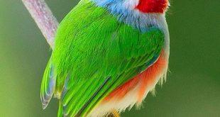 أغرب الطيور التى تم العثور عليها حتى الأن وأجملها أيضاً