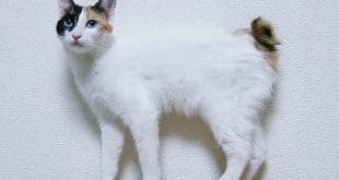 أغرب أنواع القطط التى تم إكتشافها حتى الأن على كوكب الأرض