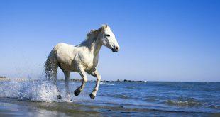 أغرب الخيول التى إكتشفها العلماء حتى الأن على كوكب الأرض مع صورها